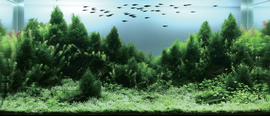 Aquascape forest Fish Tanks Pinterest