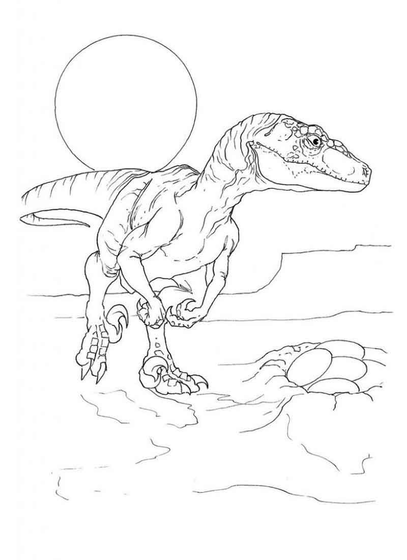 Velociraptor Coloring Page Printable
