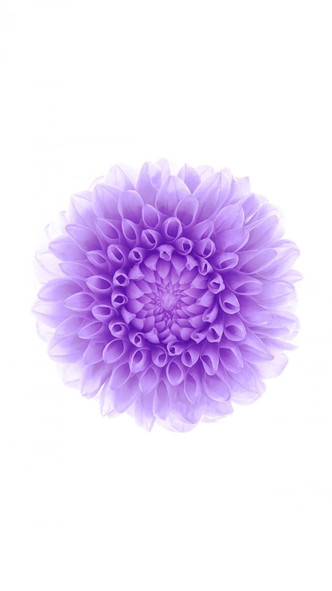 Iphone6wallpaper Purple Flower