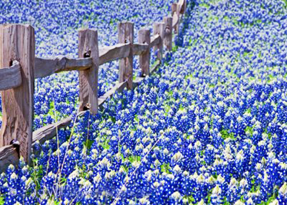The Texas Hill Country in the spring when the bluebonnets explode.