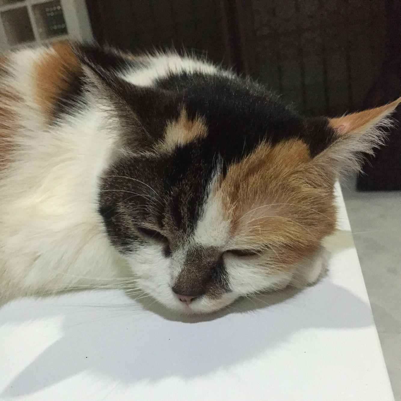 My cute cat.