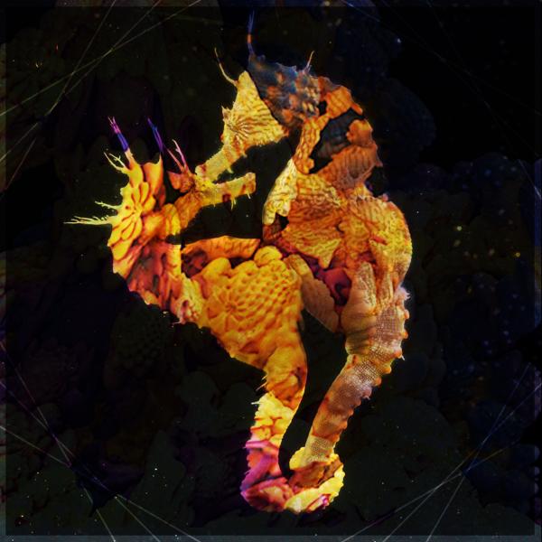 Fractal Seahorse Soundcloud Album Cover | Art & Photoshop Designs ...