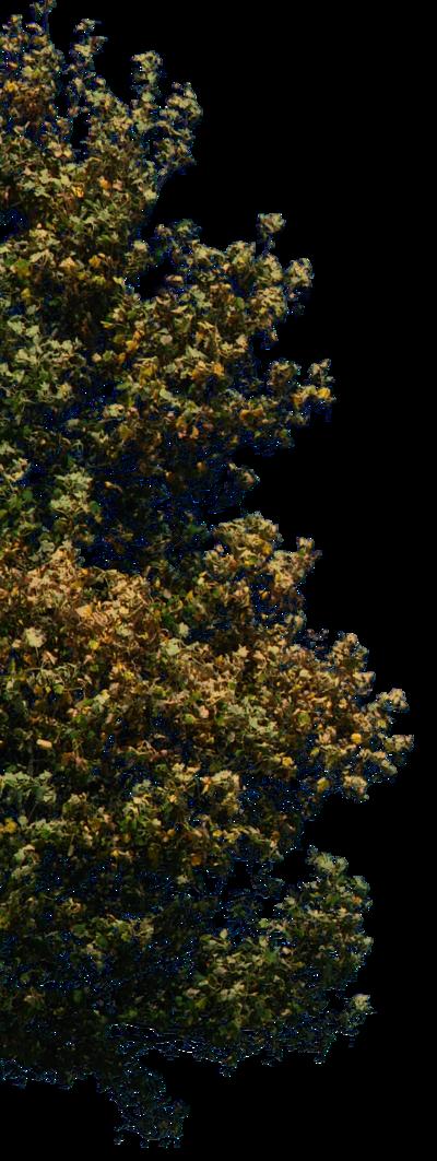 Pin by Lefki Charalambous on photoshop | 植物, 素材