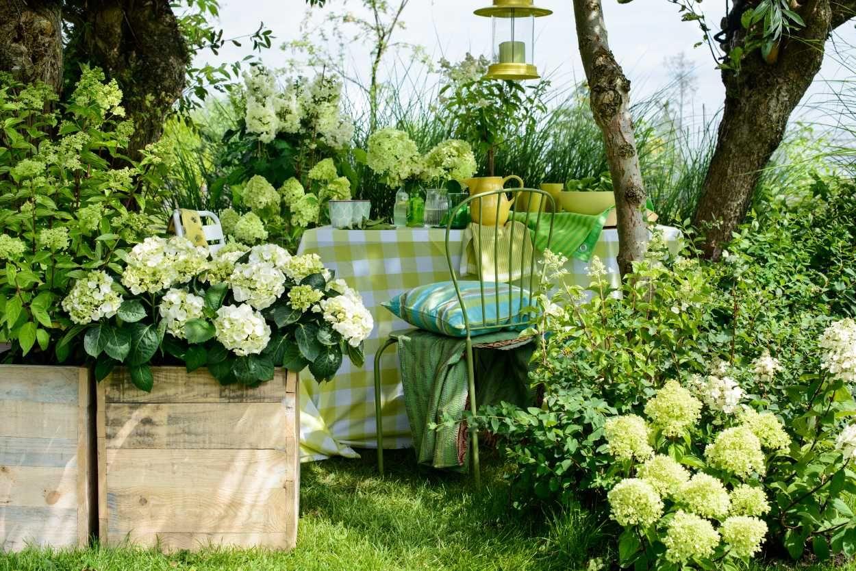 Moderner Garten Mit Hortensien