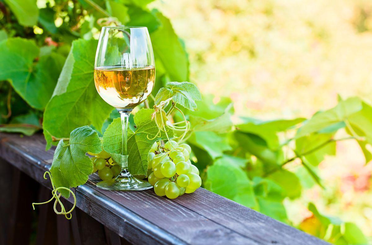 O vinho verde é uma das bebidas mais peculiares e únicas produzidas em Portugal. Conheça um pouco mais sobre ela nesse artigo!