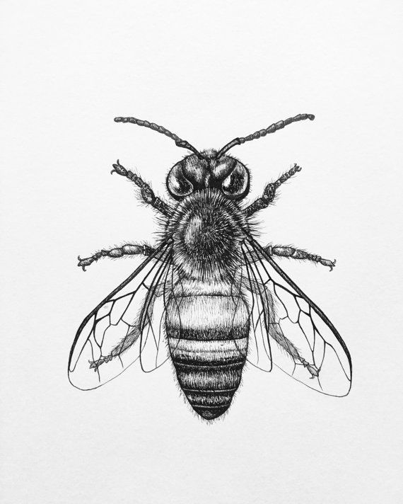 Line Art Bee : Honey bee art print pen and ink drawing by fernsandfins on