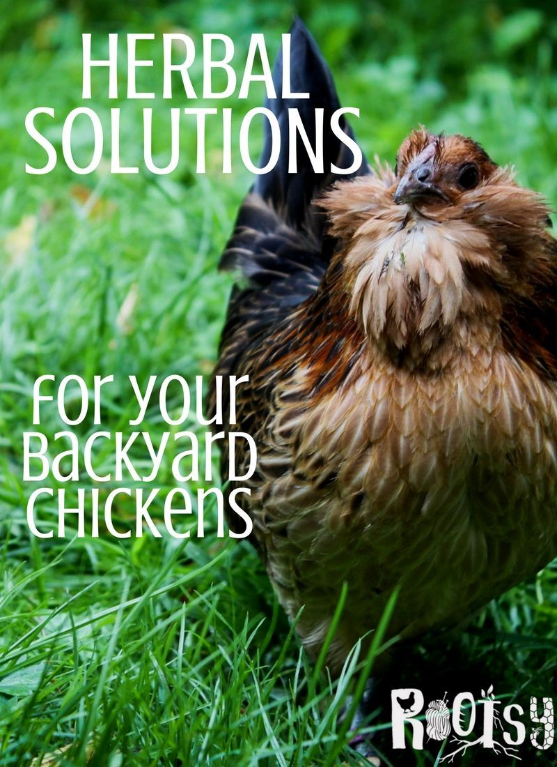 You can offer your chickens herbal solutions that are ...