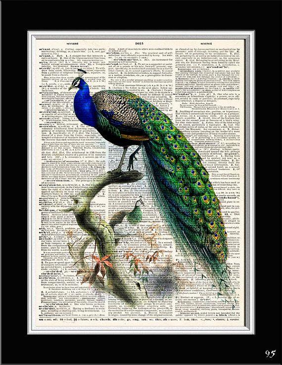 GORGEOUS PEACOCK PRINT Dictionary Art Print  by VintageArtPrint, $8,99