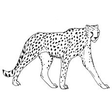 25 Best Cheetah Coloring Pages For Your Little Ones Cat Coloring Page Animal Coloring Pages Coloring Pages