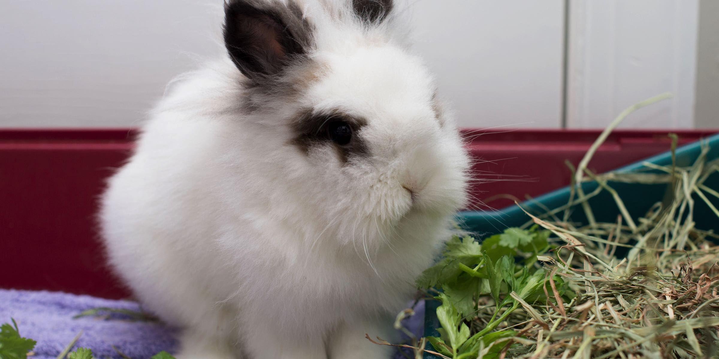 A Rabbit S Garden Triangle Rabbits Rabbit Garden Growing Vegetables In Containers Rabbit Eating