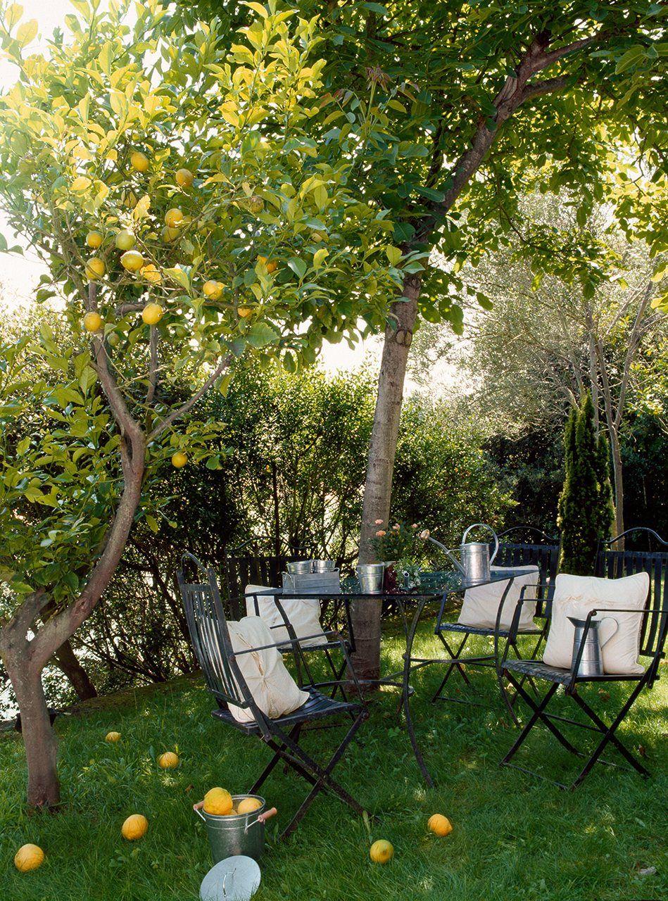 La paisajista responde limonero el arbol y crecer for La paisajista