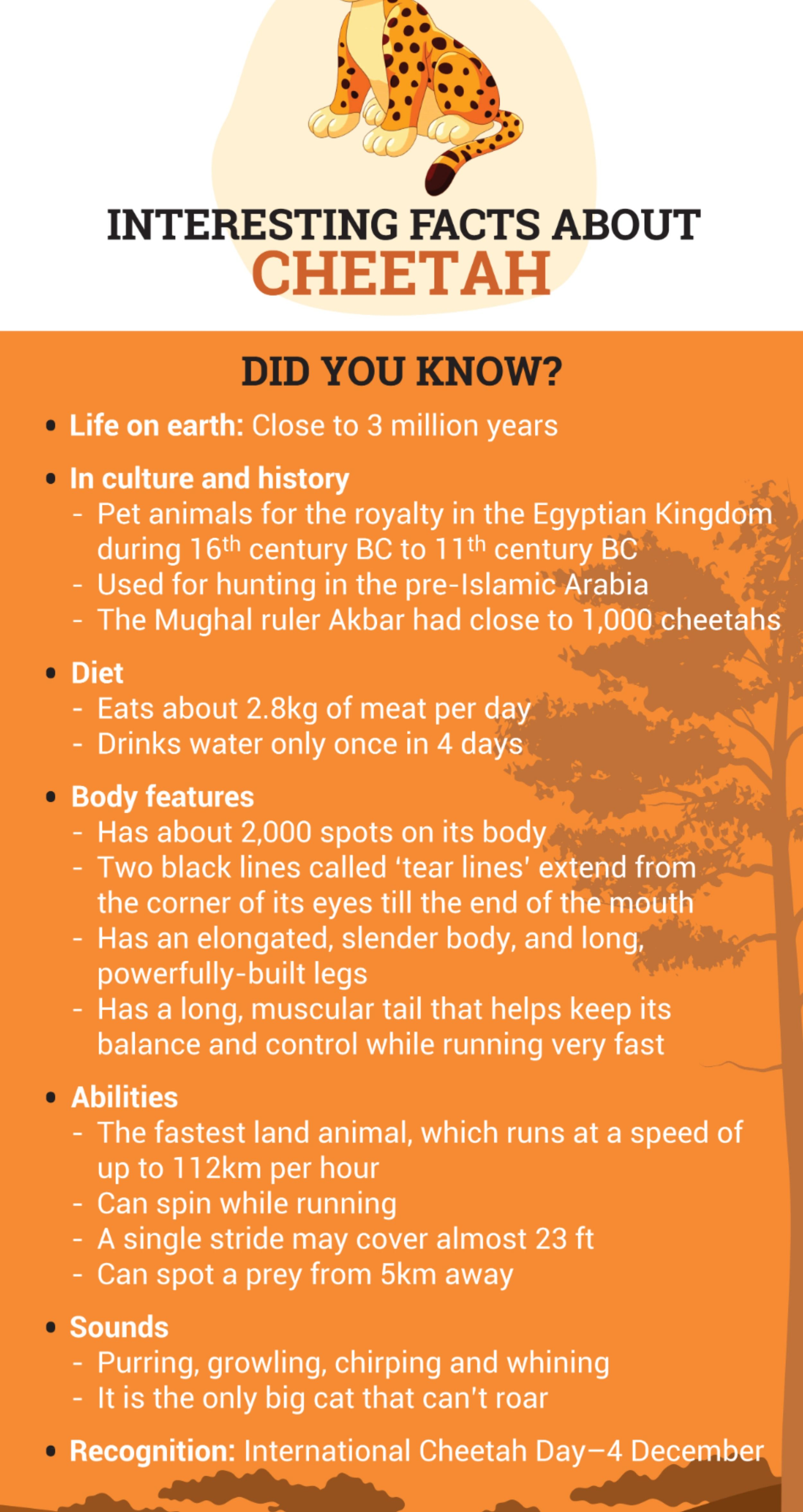 Facts About Cheetah For Kids Fun Facts Facts Faster Runner