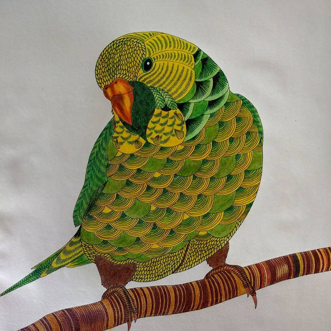 Finalizado!  #papagaio #reinoanimal #reinoanimaltop #reinoanimalolivro #milliemarottabooks #animal #life #fabercastellbrasil