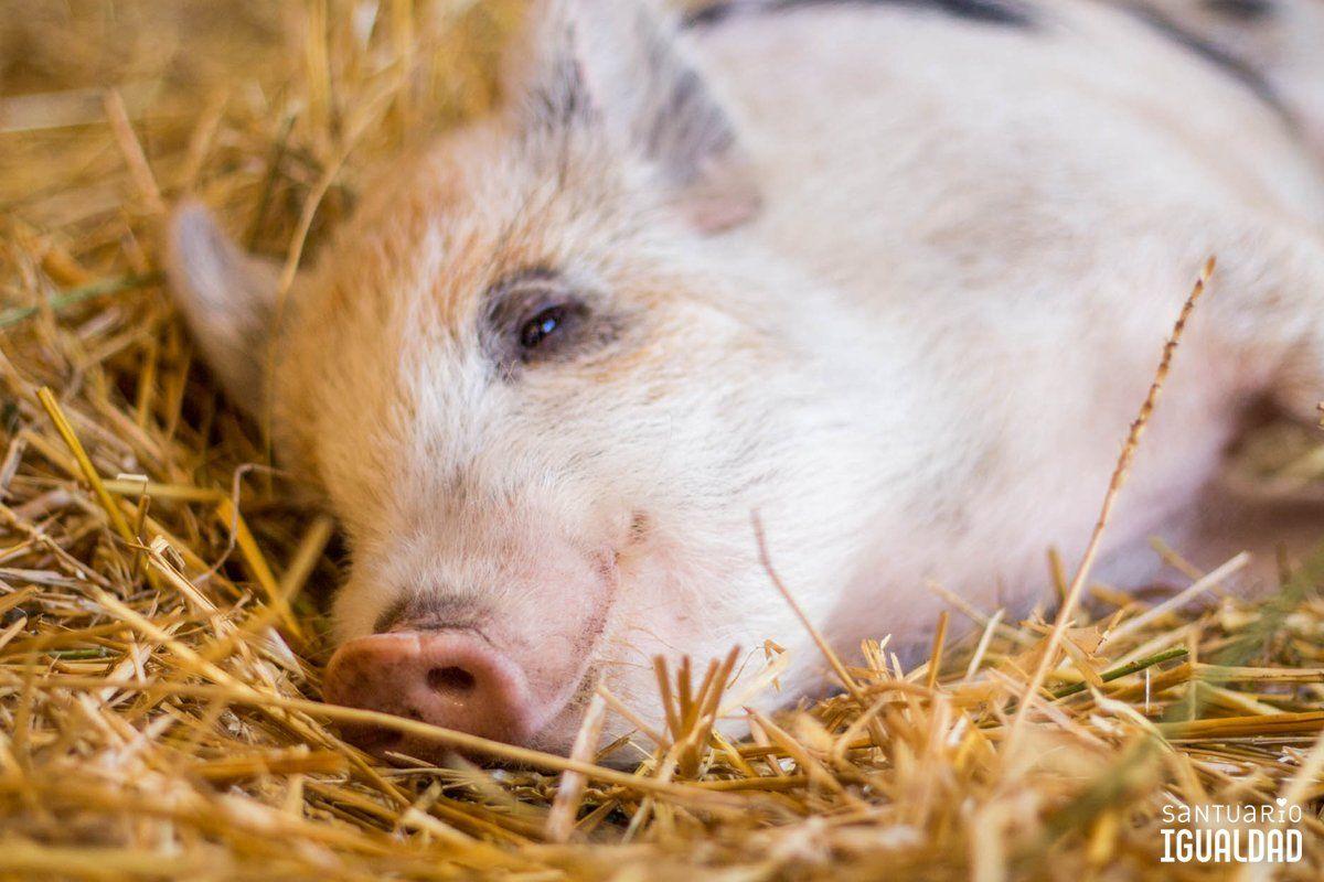 Cerrar los ojos y dormir con una sonrisa significa en idioma porcino: confío plenamente en ti y la vida que me das https://t.co/GCBiRVJ9eX