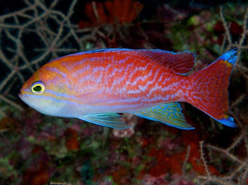 Aquarium Depot