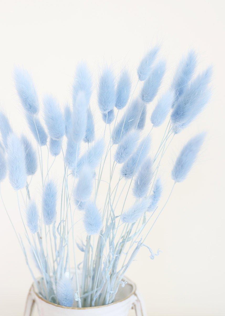 Light Blue Bunny Tail Dried Grass