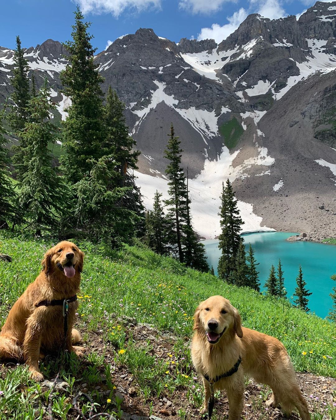 Lucy Oskar On Instagram Wanderlust Wednesday Thegreatbigworld Mountains Mountainshotz Goldens With Images Cute Cats And Dogs Dogs Golden Retriever Cute Dogs