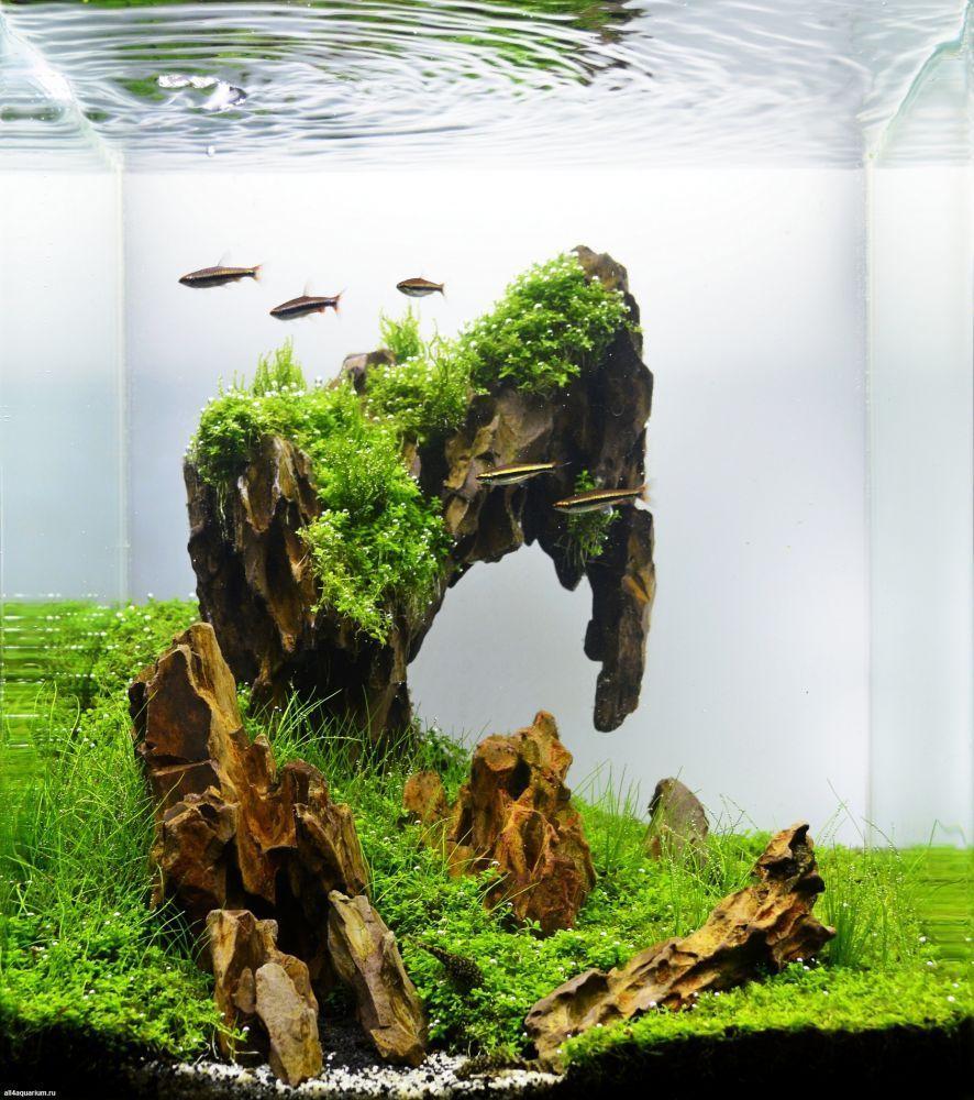 Stunning Aquascape Design Ideas 37 | Aquarium landscape ...