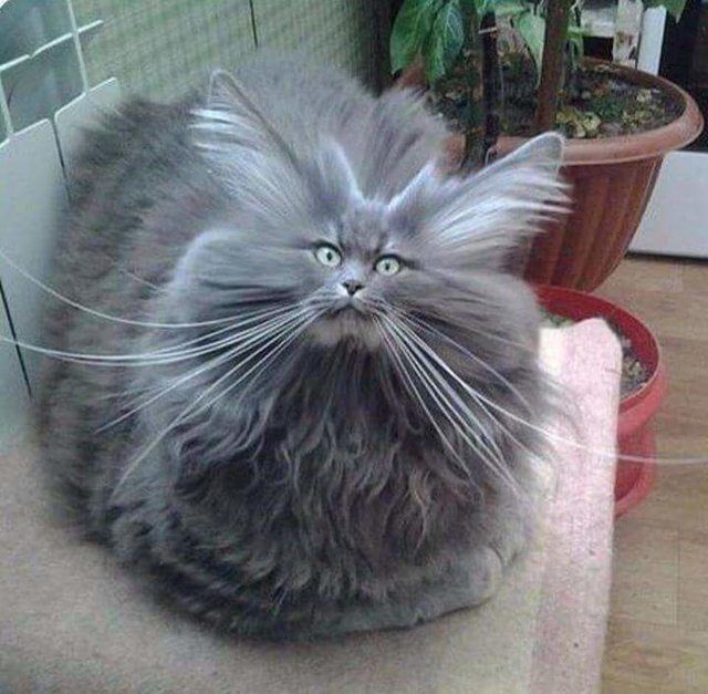 Photo of These cats are so incredibly fluffy