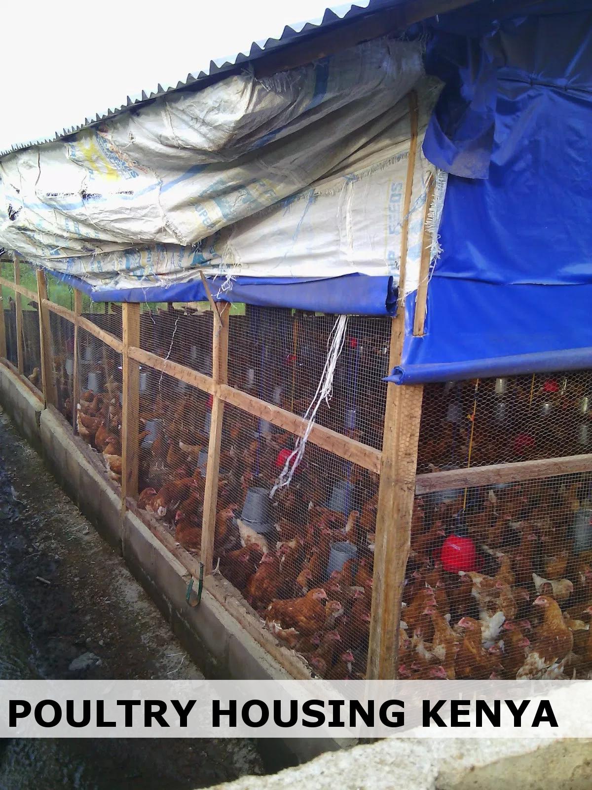 1000 layer poultry farm in Kenya | Poultry Housing Design