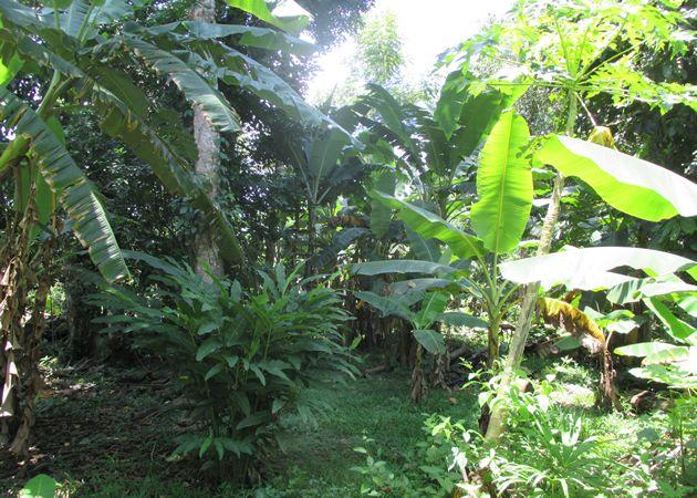 1 ha Grundstück mit kleinem Haus in der Nähe von Bananito, Costa Rica Karibik zu verkaufen. Strom und Wasser sind vorhanden. Preis: 19.500 USD.