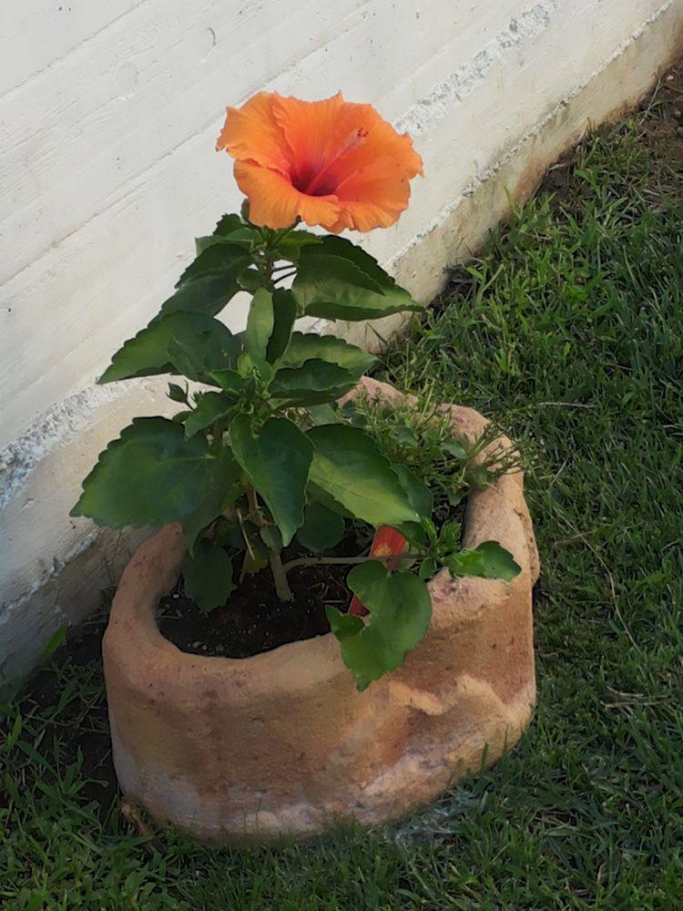 Vaso Per Fiori In Pietra Ricostruita Alleggerita, Modello: Narciso, Colore:  Mattone. Località: Avezzano (Lu0027Aquila).