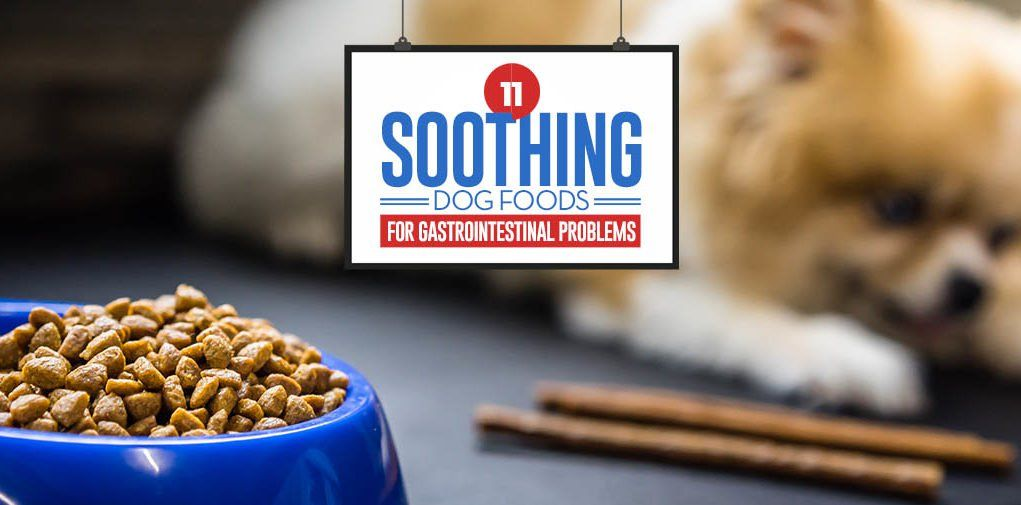 11 Best Foods For Dog S Gastrointestinal Problems Dog Food