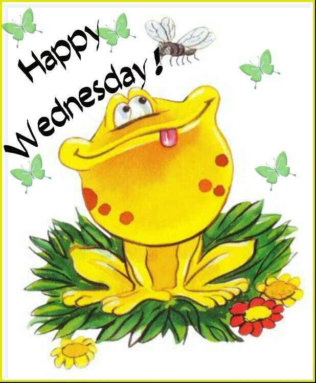 Happy Wednesday Frog | Frog art, Frog pictures, Frog ...