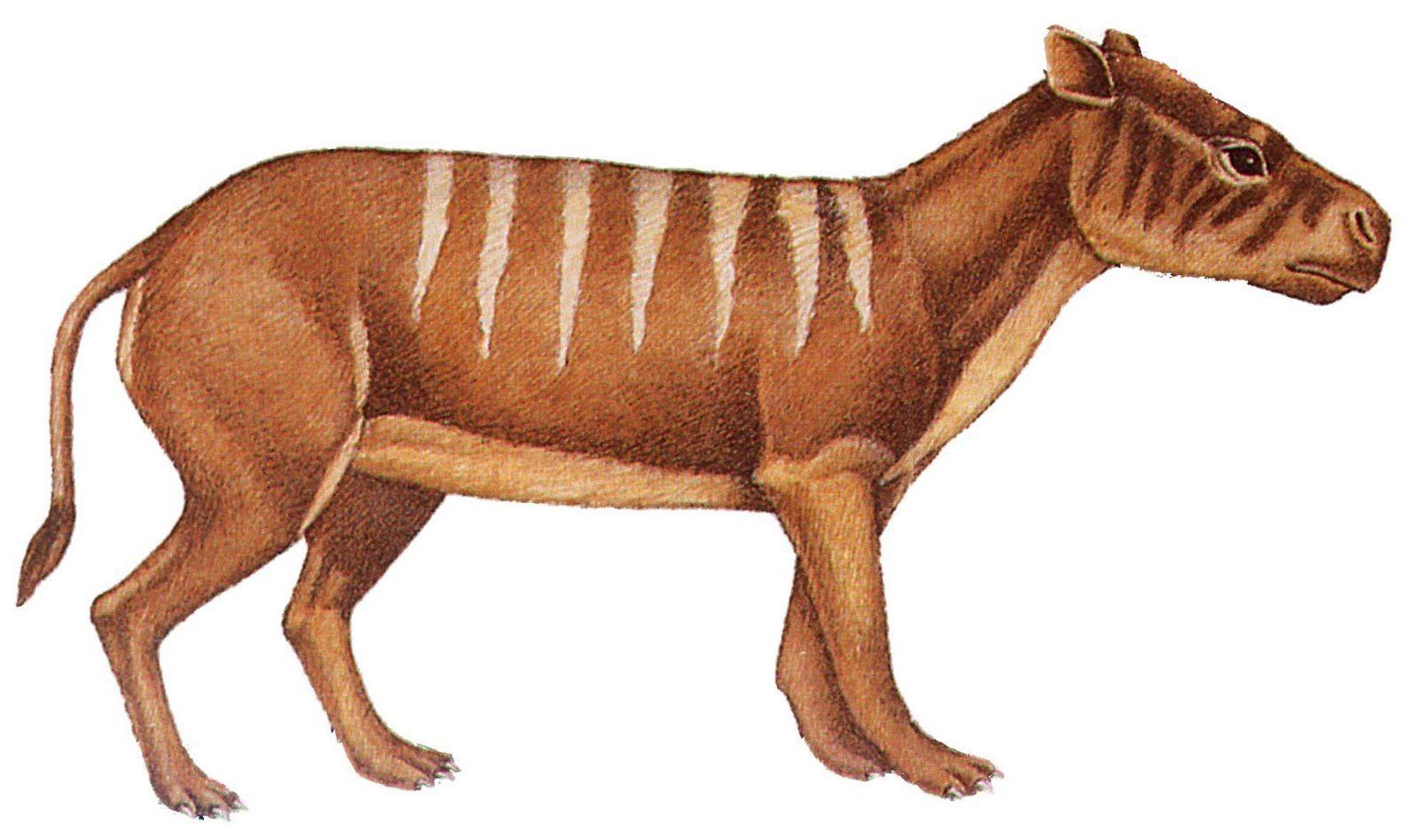 Oreodont (With images) Prehistoric animals, Prehistoric