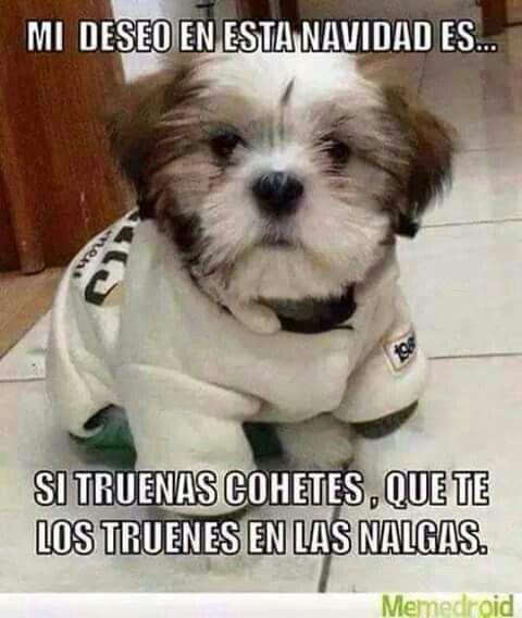 Perrito Puppies Animals Friends Funny