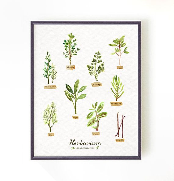 Kitchen Print Herb Watercolor Painting Herb Chart Kitchen Art