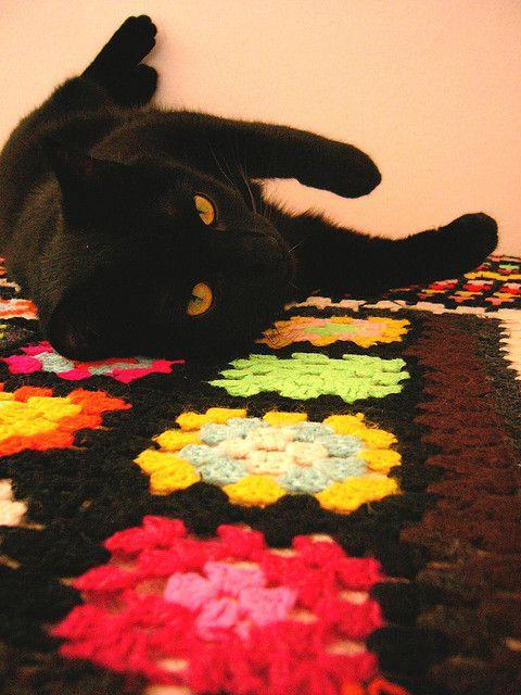 Black Cat Nulal Che Ancora Era Cucciola Black Cat Cat Love I Love Cats