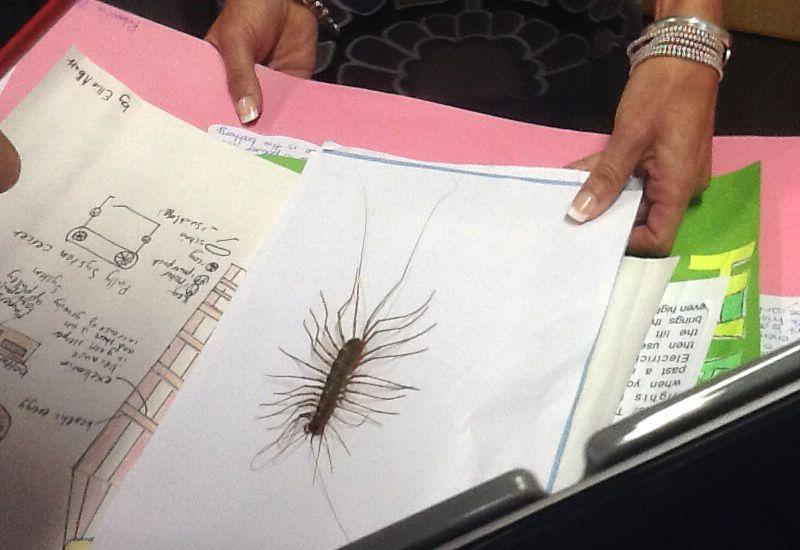 Gallery For House Centipede Nest Centipede Deep Sea Life Weird Animals
