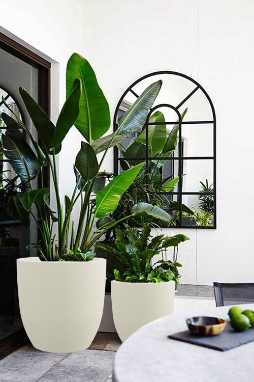Contemporary Planters Are Amongst The Widespread Forms Of Container Gardening That Are Exhibited To Emphasize Differe Indoor Plants Interior Plants Plant Decor