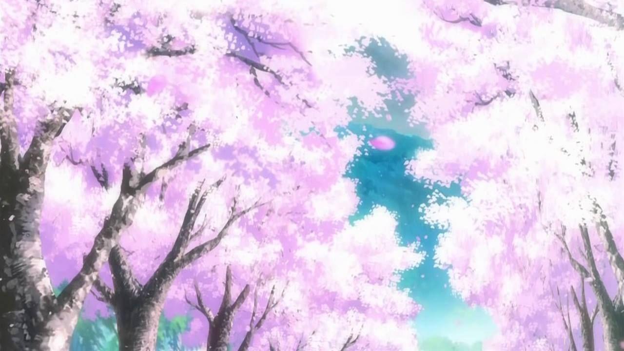 Pin By Robiya On Sakura Matsuri 2013 2016 Anime Cherry Blossom Cherry Blossom Background Cherry Blossom Tree