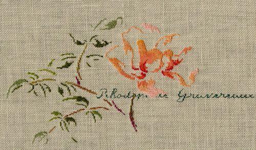 "Fleur du rosier ""Rhodophile Gravereaux"""