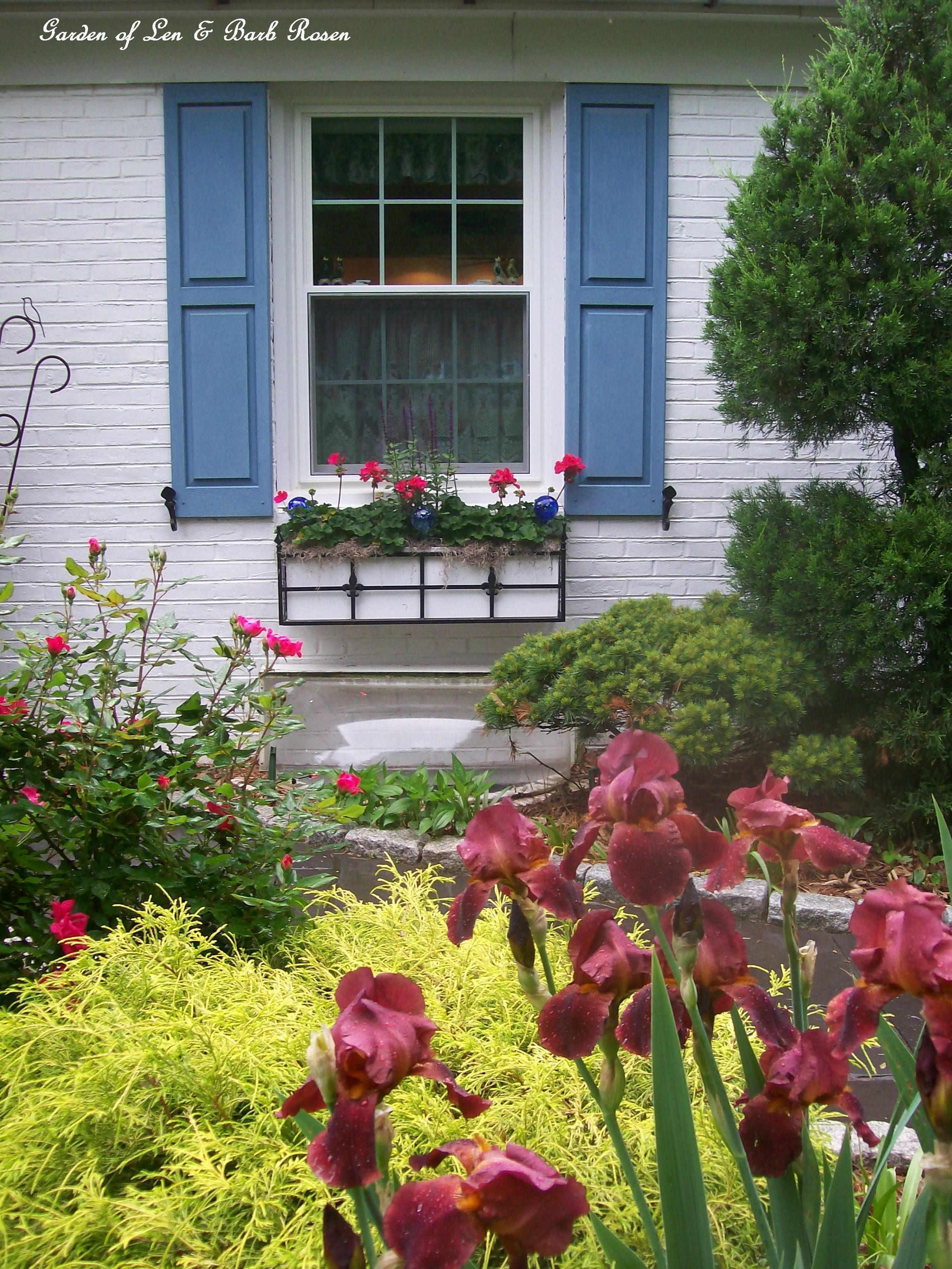 Summer window box (Garden of Len & Barb Rosen) #knockoutrosen Summer window box (Garden of Len & Barb Rosen) #knockoutrosen Summer window box (Garden of Len & Barb Rosen) #knockoutrosen Summer window box (Garden of Len & Barb Rosen) #knockoutrosen Summer window box (Garden of Len & Barb Rosen) #knockoutrosen Summer window box (Garden of Len & Barb Rosen) #knockoutrosen Summer window box (Garden of Len & Barb Rosen) #knockoutrosen Summer window box (Garden of Len & Barb Rosen) #knockoutrosen