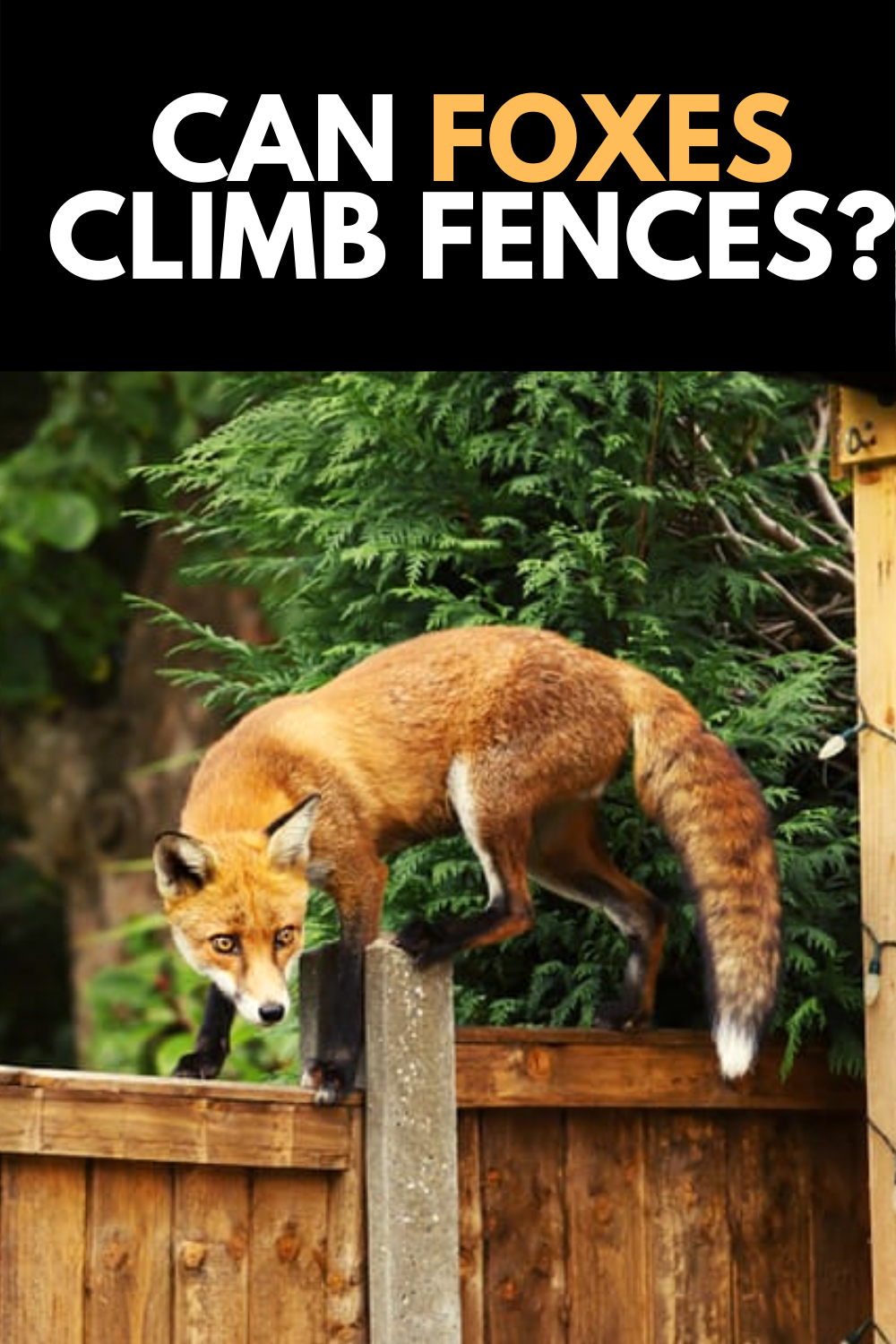 Can Foxes Climb Fences How To Prevent It 2021 Own The Yard Prey Animals Animals Fox