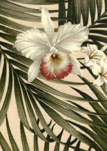 Fern Cream Tropical Hawaiian Orchid Amp Plumeria Flowers