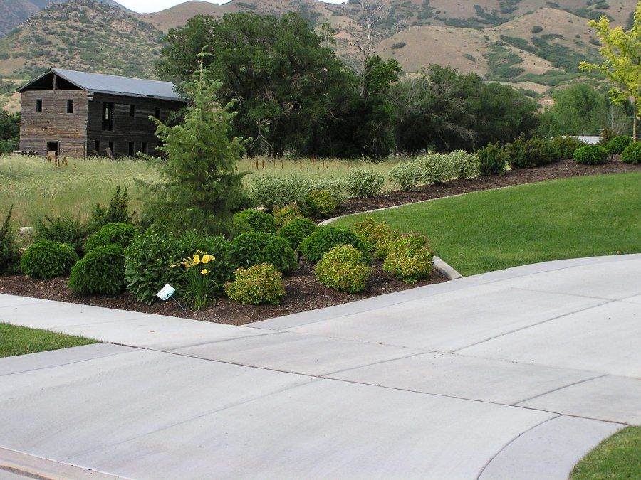 Driveway and property line landscape