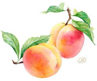 Pin De A S Cho En Ethereality Pintar Frutas Pintura De Fruta Laminas De Frutas