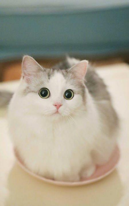 Pin de Jr Od en Pets | Pinterest | Gato, Mascotas y Animales