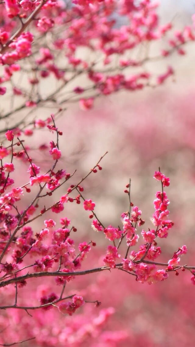 Top 17 Beauty Spring Flower Pictures Creative Digital Photography Design Tip Pictures Of Spring Flowers Spring Wallpaper Cherry Blossom Wallpaper