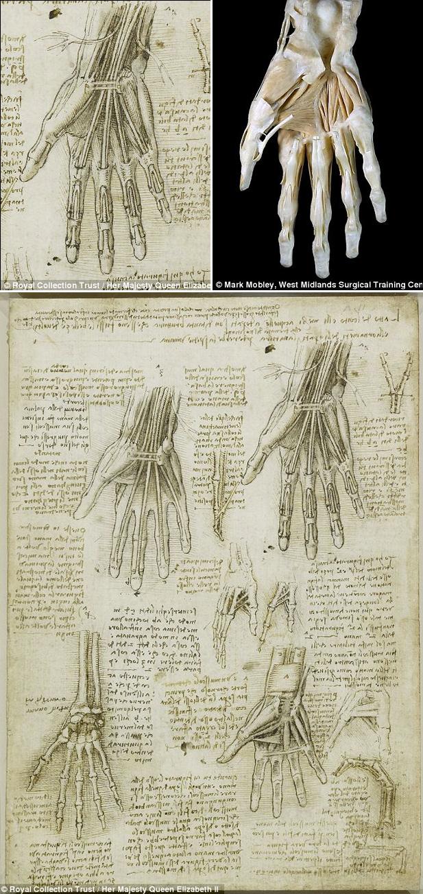 Anatomy Meets Art: Da Vinci\'s Drawings | Medical imaging technology ...