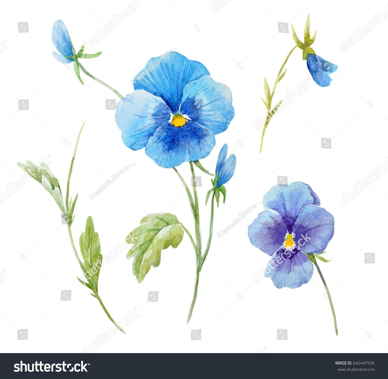 Watercolor Set Of Flowers Blue Pansies Botanical Illustration Leaves And Buds Pansies Flowers Flower Drawing Pansies