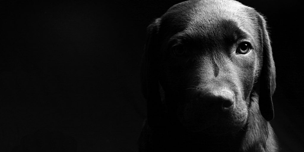 Black And White Dog Wallpapers Widescreen Is 4k Wallpaper