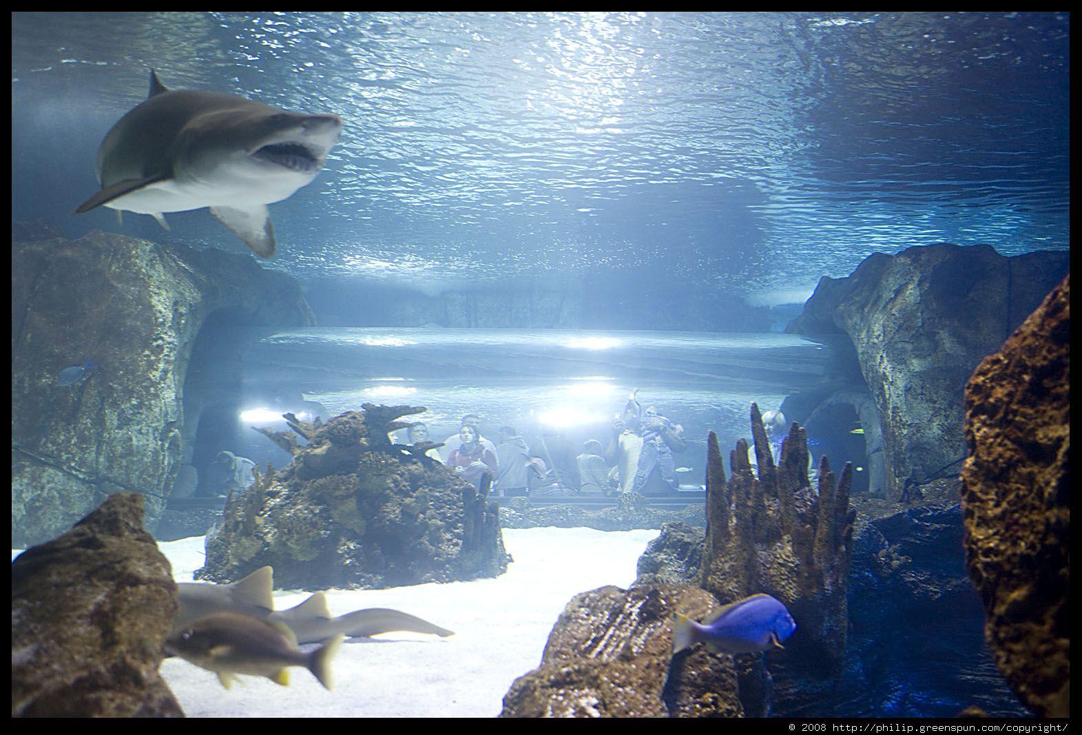 Newport Aquarium | Newport kentucky, My old kentucky home