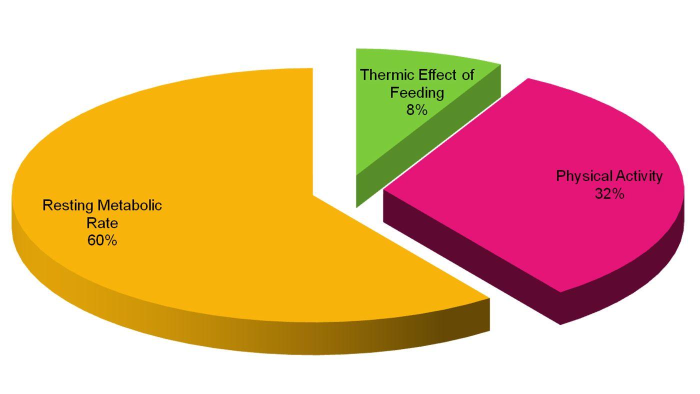 Pie Chart Of Thermic Effect Of Food Keto Plan Pinterest Keto