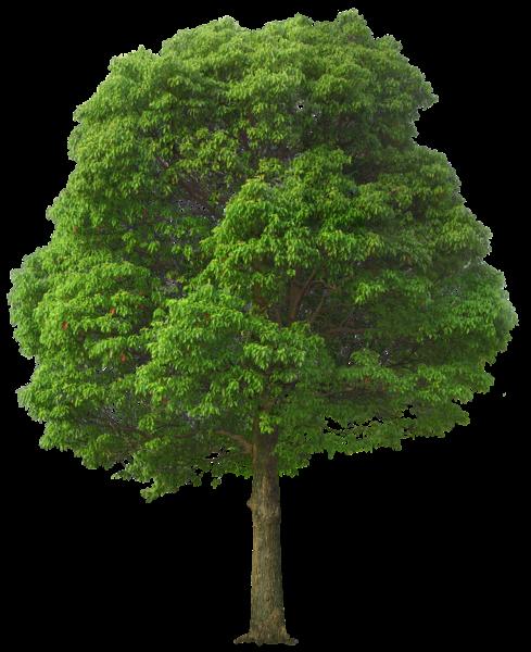 Large Green Tree Png Picture Arvores De Outono Clipart Arvore Plantio De Arvores