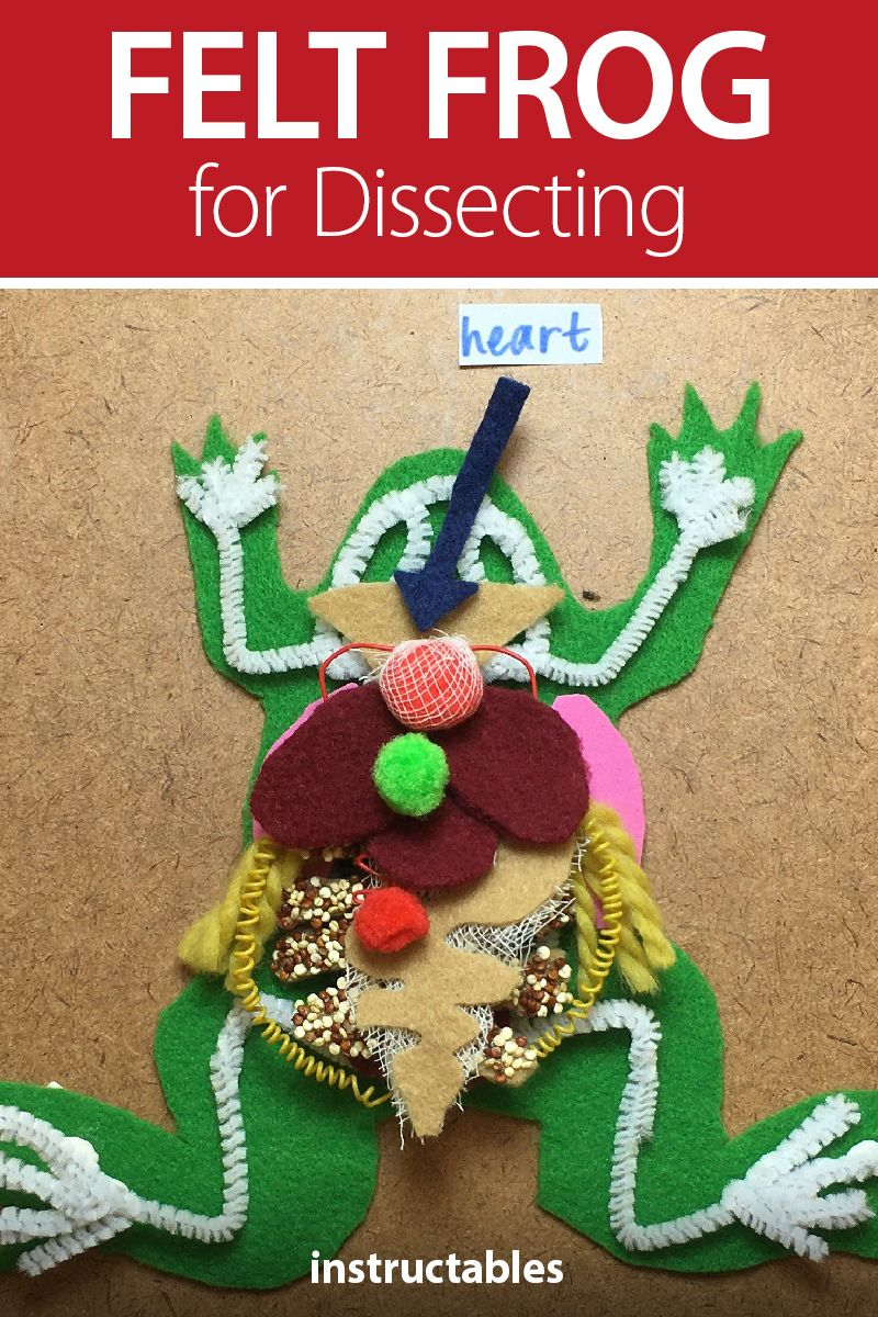 Diy Frog For Dissecting In 2020 Frog Dissection Stem Play Upper Elementary Science